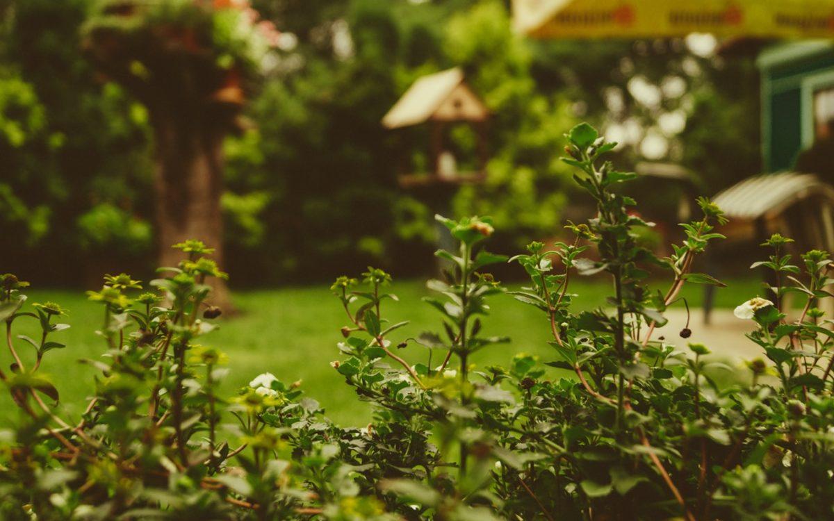 Pomysł na ogród – jak zaprojektować ogród? Zobacz nasze inspiracje