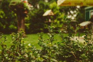 Pomysł na ogród (fot. pexels)